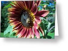 Sunflower 147 Greeting Card