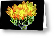 Sunflower 18-15 Greeting Card