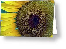 Sunflower-2 Greeting Card