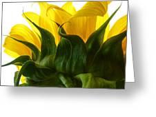 Sunflower 2015 2 Greeting Card