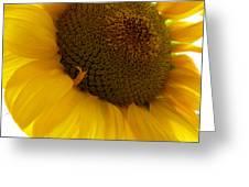 Sunflower 2015 5 Greeting Card