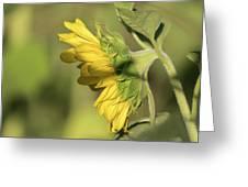 Sunflower 2016-1 Greeting Card