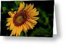 Sunflower 2017 11 Greeting Card