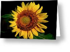 Sunflower 2017 12 Greeting Card