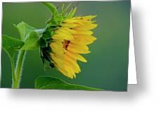 Sunflower 2017 2 Greeting Card
