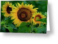 Sunflower 2017 9 Greeting Card