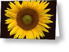 Sunflower 3 Greeting Card