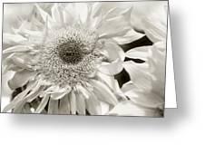 Sunflower 4 Greeting Card