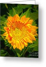 Sunflower 6 Greeting Card