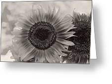 Sunflower 6 Greeting Card