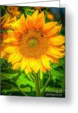Sunflower 8 Greeting Card
