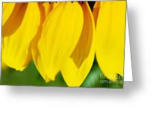 Sunflower Abstract Greeting Card