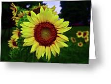 Sunflower After A Summer Rain Greeting Card