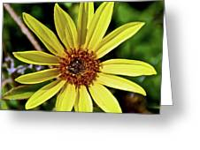Sunflower Along Etiwanda Falls Trail In San Gabriel Mountains-california  Greeting Card