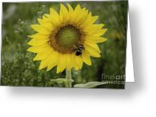 Sunflower Among The Weeds Greeting Card