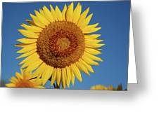 Sunflower And Blue Sky Greeting Card