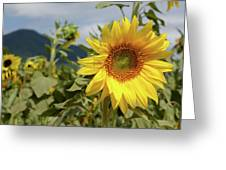 Sunflower And Peaks Of Otter Greeting Card