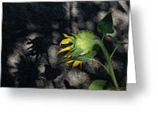 Sunflower And Shadow Greeting Card