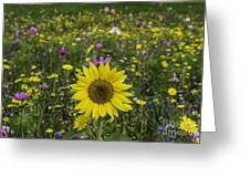 Sunflower And Wildflowers Greeting Card