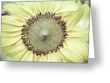 Sunflower Ant Greeting Card