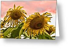 Sunflower Art 1 Greeting Card