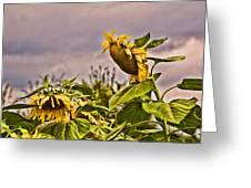 Sunflower Art 2 Greeting Card