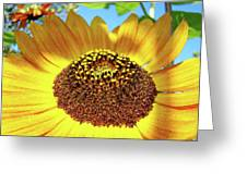 Sunflower Art Prints Orange Yellow Floral Garden Baslee Troutman Greeting Card