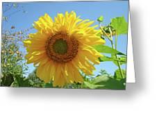 Sunflower Art Prints Sun Flower 2 Giclee Prints Baslee Troutman Greeting Card