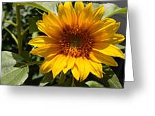 Sunflower Art- Summer Sun- Sunflowers Greeting Card