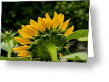 Sunflower Back Greeting Card