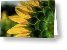 Sunflower Blooming Detailed Greeting Card by Dennis Dame