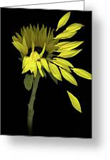 Sunflower Breeze Greeting Card