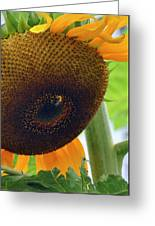 Sunflower Close Up Greeting Card