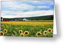Sunflower Country Landscape  Greeting Card