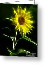 Sunflower Display Greeting Card