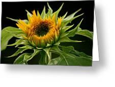 Sunflower - Doubleshine Greeting Card