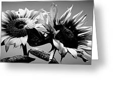 Sunflower Duo Bw Greeting Card