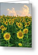 Sunflower Faces At Sunset Greeting Card