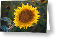 Sunflower - Facing East Greeting Card