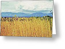 Sunflower Field 2 Greeting Card