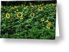 Sunflower Field Panorama Greeting Card