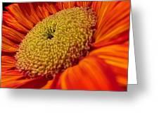 Sunflower Fire 1 Greeting Card
