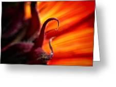 Sunflower Fire 2 Greeting Card