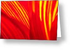 Sunflower Fire 3 Greeting Card