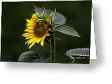 Sunflower Fractalius Beauty Greeting Card