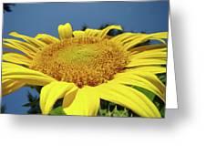 Sunflower Garden Art Print Yellow Summer Sun Flower Baslee Greeting Card