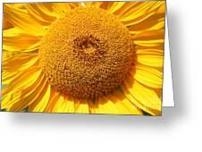 Sunflower Head  Greeting Card