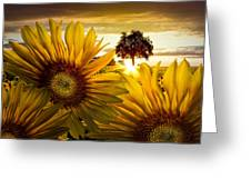 Sunflower Heaven Greeting Card