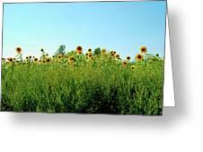Sunflower Horizon Greeting Card