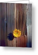 Sunflower In Barn Wood Greeting Card by Garry Gay